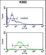 ANAPC7 / APC7 Antibody - ANAPC7 Antibody (Center) flow cytometry of K562 cells (bottom histogram) compared to a negative control cell (top histogram).FITC-conjugated goat-anti-rabbit secondary antibodies were used for the analysis.