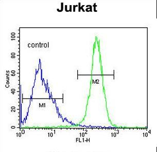 ANGEL1 Antibody flow cytometry of Jurkat cells (right histogram) compared to a negative control cell (left histogram). FITC-conjugated goat-anti-rabbit secondary antibodies were used for the analysis.