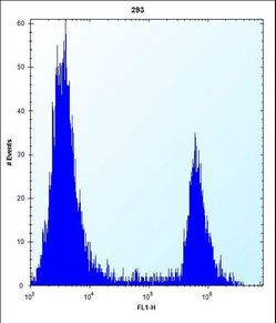 ANGPTL7 Antibody flow cytometry of 293 cells (right histogram) compared to a negative control cell (left histogram). FITC-conjugated goat-anti-rabbit secondary antibodies were used for the analysis.