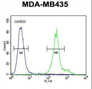 ANKFY1 Antibody - ANKFY1 Antibody flow cytometry of MDA-MB435 cells (right histogram) compared to a negative control cell (left histogram). FITC-conjugated goat-anti-rabbit secondary antibodies were used for the analysis.