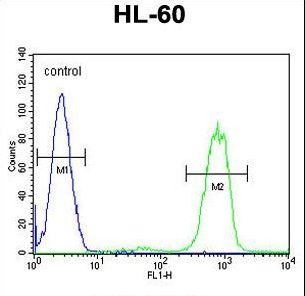 ANKRD40 Antibody flow cytometry of HL-60 cells (right histogram) compared to a negative control cell (left histogram). FITC-conjugated goat-anti-rabbit secondary antibodies were used for the analysis.