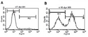 Analysis of Apoptosis with the Annexin V-PE Apoptosis Detection Kit: Apoptosis was induced in Jurkat cells by 4-6 hrs incubation with 2 µM Camptothecin. The resultant apoptosis was quantified in un-induced cells (a) and the induced cells (b) using this detection kit.