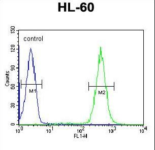 APOBEC2 Antibody - APOBEC2 Antibody flow cytometry of HL-60 cells (right histogram) compared to a negative control cell (left histogram). FITC-conjugated goat-anti-rabbit secondary antibodies were used for the analysis.