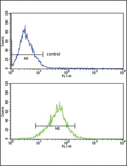APOL1 Antibody (19169) FC of MCF-7 cells (bottom histogram) compared to a negative control cell (top histogram). FITC-conjugated goat-anti-rabbit secondary antibodies were used for the analysis.