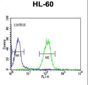 APOL4 Antibody (Center E273) flow cytometry of HL-60 cells (right histogram) compared to a negative control cell (left histogram). FITC-conjugated goat-anti-rabbit secondary antibodies were used for the analysis.