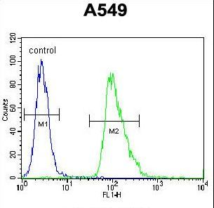 AQP12B Antibody flow cytometry of A549 cells (right histogram) compared to a negative control cell (left histogram). FITC-conjugated goat-anti-rabbit secondary antibodies were used for the analysis.