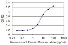 AREG / Amphiregulin Antibody - Detection limit for recombinant GST tagged AREG is 0.3 ng/ml as a capture antibody.