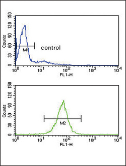 ARHGDIA Antibody flow cytometry of HL-60 cells (bottom histogram) compared to a negative control cell (top histogram). FITC-conjugated goat-anti-rabbit secondary antibodies were used for the analysis.