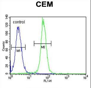 ARL8 Antibody flow cytometry of CEM cells (right histogram) compared to a negative control cell (left histogram). FITC-conjugated goat-anti-rabbit secondary antibodies were used for the analysis.