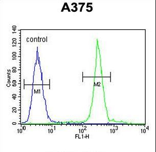 ARL8A Antibody flow cytometry of A375 cells (right histogram) compared to a negative control cell (left histogram). FITC-conjugated goat-anti-rabbit secondary antibodies were used for the analysis.