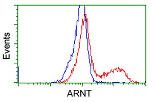 HEK293T cells transfected with either overexpress plasmid (Red) or empty vector control plasmid (Blue) were immunostained by anti-ARNT antibody, and then analyzed by flow cytometry.