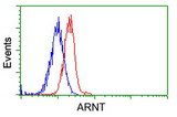 Flow cytometry of Jurkat cells, using anti-ARNT antibody, (Red), compared to a nonspecific negative control antibody, (Blue).