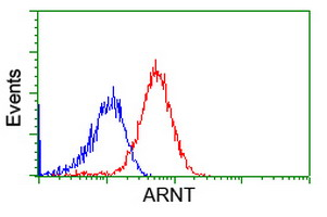 Flow cytometry of HeLa cells, using anti-ARNT antibody, (Red), compared to a nonspecific negative control antibody, (Blue).