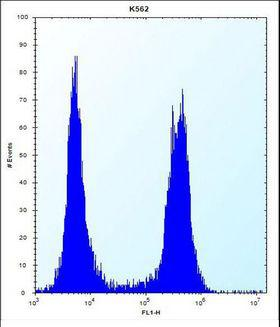 ARSF / Arylsulfatase F Antibody - ARSF Antibody flow cytometry of K562 cells (right histogram) compared to a negative control cell (left histogram). FITC-conjugated donkey-anti-rabbit secondary antibodies were used for the analysis.