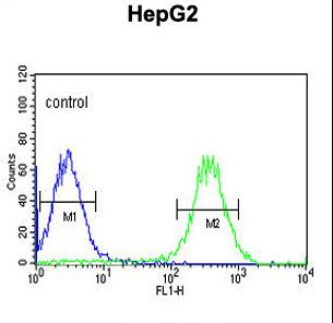 ARSI / Arylsulfatase I Antibody - ARSI Antibody flow cytometry of HepG2 cells (right histogram) compared to a negative control cell (left histogram). FITC-conjugated goat-anti-rabbit secondary antibodies were used for the analysis.