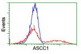 HEK293T cells transfected with either overexpress plasmid (Red) or empty vector control plasmid (Blue) were immunostained by anti-ASCC1 antibody, and then analyzed by flow cytometry.