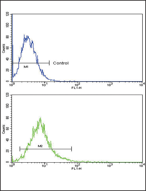 ATF6 Antibody flow cytometry of k562 cells (bottom histogram) compared to a negative control cell (top histogram). FITC-conjugated goat-anti-rabbit secondary antibodies were used for the analysis.