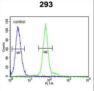 ATG14 Antibody - ATG14 Antibody flow cytometry of 293 cells (right histogram) compared to a negative control cell (left histogram). FITC-conjugated goat-anti-rabbit secondary antibodies were used for the analysis.