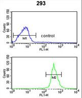 ATP11C Antibody - ATP11C Antibody flow cytometry of 293 cells (bottom histogram) compared to a negative control cell (top histogram). FITC-conjugated goat-anti-rabbit secondary antibodies were used for the analysis.