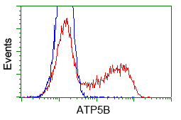 HEK293T cells transfected with either pCMV6-ENTRY ATP5B (Red) or empty vector control plasmid (Blue) were immunostained with anti-ATP5B mouse monoclonal, and then analyzed by flow cytometry.