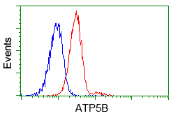 Flow cytometry of Jurkat cells, using anti-ATP5B antibody, (Red) compared to a nonspecific negative control antibody (Blue).