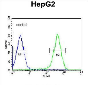 ATXN2L Antibody - ATXN2L Antibody flow cytometry of HepG2 cells (right histogram) compared to a negative control cell (left histogram). FITC-conjugated goat-anti-rabbit secondary antibodies were used for the analysis.