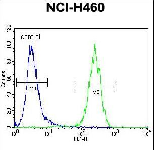 ATXN7L2 Antibody flow cytometry of NCI-H460 cells (right histogram) compared to a negative control cell (left histogram). FITC-conjugated goat-anti-rabbit secondary antibodies were used for the analysis.