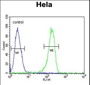 AUTL1 / ATG4C Antibody - ATG4C Antibody flow cytometry of HeLa cells (right histogram) compared to a negative control cell (left histogram).FITC-conjugated goat-anti-rabbit secondary antibodies were used for the analysis.