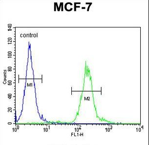 AVPI1 Antibody - AVPI1 Antibody flow cytometry of MCF-7 cells (right histogram) compared to a negative control cell (left histogram). FITC-conjugated goat-anti-rabbit secondary antibodies were used for the analysis.