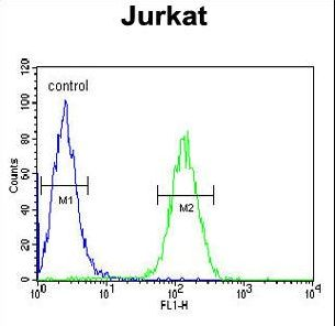 AXIN2 Antibody flow cytometry of Jurkat cells (right histogram) compared to a negative control cell (left histogram). FITC-conjugated goat-anti-rabbit secondary antibodies were used for the analysis.