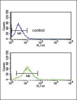 B1R / BDKRB1 Antibody - BDKRB1 Antibody flow cytometry of HepG2 cells (bottom histogram) compared to a negative control cell (top histogram). FITC-conjugated goat-anti-rabbit secondary antibodies were used for the analysis.