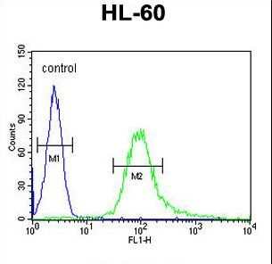 B3GNT4 Antibody flow cytometry of HL-60 cells (right histogram) compared to a negative control cell (left histogram). FITC-conjugated goat-anti-rabbit secondary antibodies were used for the analysis.