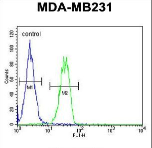 B4GALT6 Antibody flow cytometry of MDA-MB231 cells (right histogram) compared to a negative control cell (left histogram). FITC-conjugated goat-anti-rabbit secondary antibodies were used for the analysis.