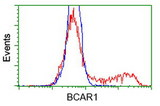 HEK293T cells transfected with either overexpress plasmid (Red) or empty vector control plasmid (Blue) were immunostained by anti-BCAR1 antibody, and then analyzed by flow cytometry.