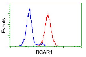 Flow cytometry of HeLa cells, using anti-BCAR1 antibody (Red), compared to a nonspecific negative control antibody (Blue).