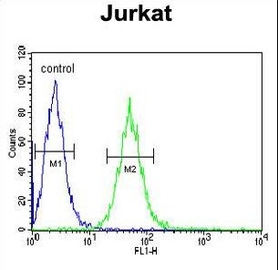 BCKDHA / BCKDE1A Antibody - BCKDHA Antibody flow cytometry of Jurkat cells (right histogram) compared to a negative control cell (left histogram). FITC-conjugated goat-anti-rabbit secondary antibodies were used for the analysis.