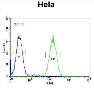 BCKDHB Antibody - BCKDHB Antibody flow cytometry of HeLa cells (right histogram) compared to a negative control cell (left histogram). FITC-conjugated goat-anti-rabbit secondary antibodies were used for the analysis.