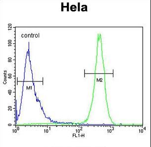BECN1 / Beclin-1 Antibody - Beclin1-BH3 Domain Antibody flow cytometry of HeLa cells (right histogram) compared to a negative control cell (left histogram). FITC-conjugated goat-anti-rabbit secondary antibodies were used for the analysis.