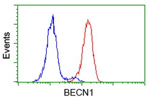 BECN1 / Beclin-1 Antibody - Flow cytometry of HeLa cells, using anti-BECN1 antibody (Red), compared to a nonspecific negative control antibody (Blue).