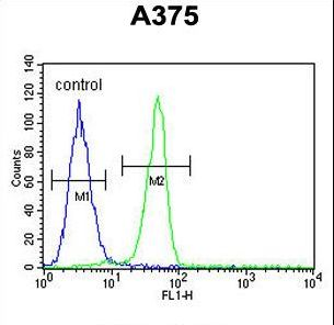 BGN / Biglycan Antibody - BGN Antibody flow cytometry of A375 cells (right histogram) compared to a negative control cell (left histogram). FITC-conjugated goat-anti-rabbit secondary antibodies were used for the analysis.