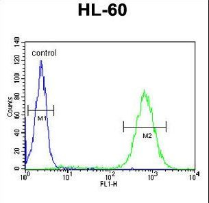BHLHE22 / BHLHB5 Antibody - BHLHB5 Antibody flow cytometry of HL-60 cells (right histogram) compared to a negative control cell (left histogram). FITC-conjugated goat-anti-rabbit secondary antibodies were used for the analysis.
