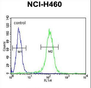 BHLHE41 / BHLHB3 / SHARP1 Antibody - BHLH3 Antibody flow cytometry of NCI-H460 cells (right histogram) compared to a negative control cell (left histogram). FITC-conjugated goat-anti-rabbit secondary antibodies were used for the analysis.