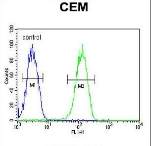BIN2 Antibody flow cytometry of CEM cells (right histogram) compared to a negative control cell (left histogram). FITC-conjugated goat-anti-rabbit secondary antibodies were used for the analysis.