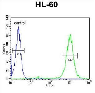 BLM Antibody - BLM Antibody flow cytometry of HL-60 cells (right histogram) compared to a negative control cell (left histogram). FITC-conjugated goat-anti-rabbit secondary antibodies were used for the analysis.