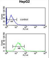 BLOC1S2 Antibody - BLOC1S2 Antibody flow cytometry of HepG2 cells (bottom histogram) compared to a negative control cell (top histogram). FITC-conjugated goat-anti-rabbit secondary antibodies were used for the analysis.