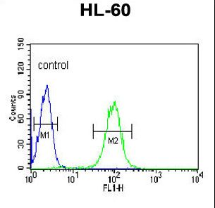 BPI Antibody flow cytometry of HL-60 cells (right histogram) compared to a negative control cell (left histogram). FITC-conjugated goat-anti-rabbit secondary antibodies were used for the analysis.