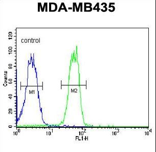 BTNL8 Antibody flow cytometry of MDA-MB435 cells (right histogram) compared to a negative control cell (left histogram). FITC-conjugated goat-anti-rabbit secondary antibodies were used for the analysis.