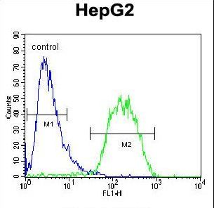 BUD13 Antibody flow cytometry of HepG2 cells (right histogram) compared to a negative control cell (left histogram). FITC-conjugated goat-anti-rabbit secondary antibodies were used for the analysis.