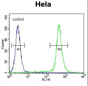 C18orf8 / MIC1; Antibody - MIC1 Antibody flow cytometry of HeLa cells (right histogram) compared to a negative control cell (left histogram). FITC-conjugated goat-anti-rabbit secondary antibodies were used for the analysis.