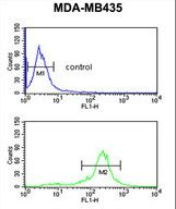 C19orf26 Antibody - C19orf26 Antibody flow cytometry of MDA-MB435 cells (bottom histogram) compared to a negative control cell (top histogram). FITC-conjugated goat-anti-rabbit secondary antibodies were used for the analysis.